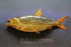 ichthyology-002