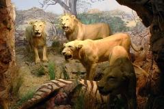 mammalogy-002